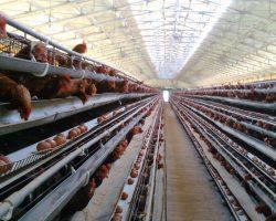 งานเกษตรปศุสัตว์_200618_0003