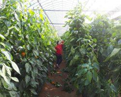งานเกษตรเพาะปลูก_200618_0001