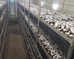 งานเกษตรเพาะปลูก_200618_0010