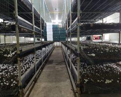 งานเกษตรเพาะปลูก_200618_0011