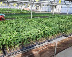 งานเกษตรเพาะปลูก_200618_0016