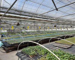 งานเกษตรเพาะปลูก_200618_0019