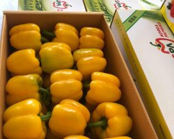 งานเกษตรเพาะปลูก_200618_0022