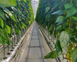 งานเกษตรเพาะปลูก_200618_0028