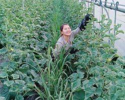 งานเกษตรเพาะปลูก_200618_0033