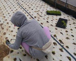 งานเกษตรเพาะปลูก_200618_0034