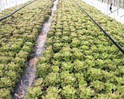 งานเกษตรเพาะปลูก_200618_0043