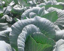 งานเกษตรเพาะปลูก_200618_0045