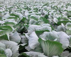 งานเกษตรเพาะปลูก_200618_0046